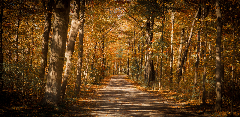 Fort Erie Friendship Trail in fall